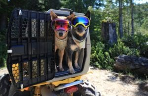 This Kennel Is a Safer Way to Travel With Your Pet