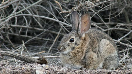 A deadly virus is killing wild rabbits in North America | Science